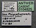 Formicoxenus provancheri casent0104825 label 1.jpg