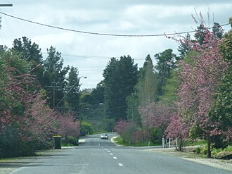 Forreston, South Australia - The main street of Forreston, South Australia in full bloom at springtime