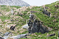 Fotógrafo en al isla de Hornøya.jpg