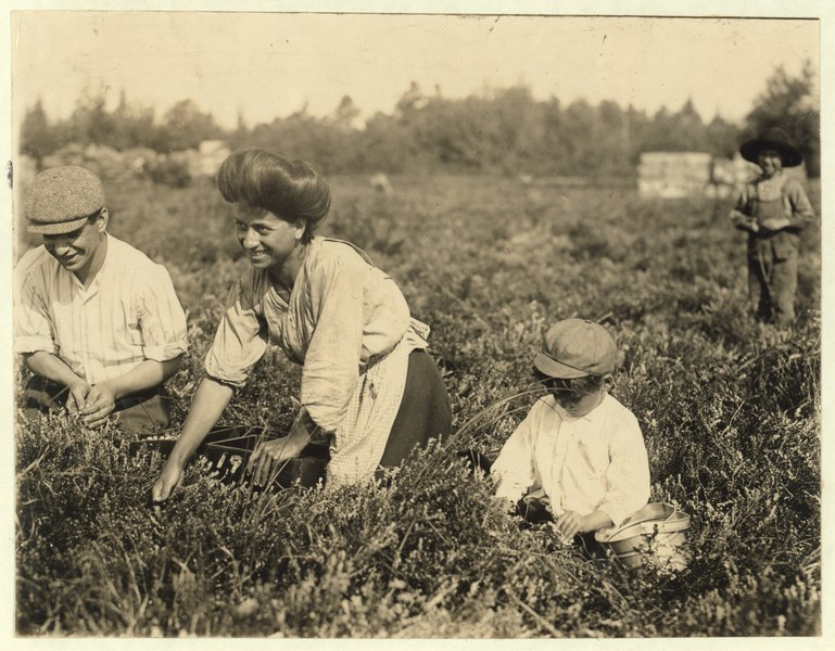 File:Fred Nozzecho, 604 Annin St., Philadelphial. Five years old. Picking this year. Theodore Budd's Bog at Turkeytown near Pemberton, N.J. This is the fourth week of school in Philadelphia and LOC nclc.05290.tif
