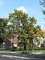 Friedenseiche (Moritzburg) 01.JPG