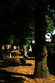 Friedhofsallee Hannover Blick Richtung Stadtfriedhof Seelhorst Hoher Weg Lindenallee Licht und Schatten II.jpg