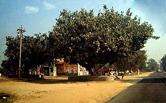Phaguwala - Front view of Phaguwala