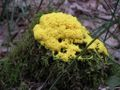Fungus yellow.jpg