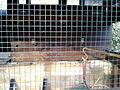 Gallinero Interior 13.jpg