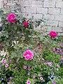 Garden's 12.jpg