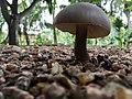 Garden Mushroom.jpg