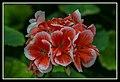 Gardens by the Marina Bay - Dome Flowers-01 (8322662157).jpg