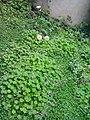 Gardens in Baghdad 42.jpg