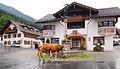 Garmisch-Partenkirchen - cow.jpg