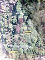 Garnisons- und Jüdischer Friedhof Stade 19.jpg