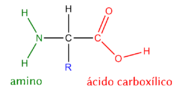 General structure of aminoacids - AA-structure-es.png