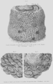 Geology and Mineralogy considered with reference to Natural Theology, plate 61.png