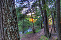 Gfp-michigan-porcupine-mountains-state-park-far-view-of-sunset-between-trees.jpg