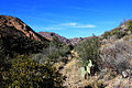 Gfp-texas-big-bend-national-park-landscape-on-the-mountain-path.jpg