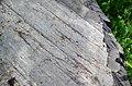 Glacial striations from Pleistocene glaciation on Mud Lake sequence sedimentary rocks (Neoarchean; Bourgin Road roadcut, Virginia, Minnesota, USA) 15 (23131020819).jpg