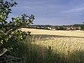 Golden Field - geograph.org.uk - 791764.jpg