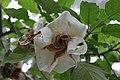 "Gradina Botanica ""Vasile Fati"" (4656655399).jpg"