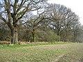 Grand trees along the boundary - geograph.org.uk - 1240609.jpg