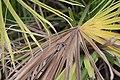 Grass hopper01.jpg