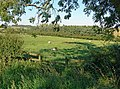 Grazing sheep south of the village of Owston - geograph.org.uk - 522404.jpg