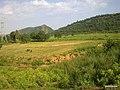 Green Hills, India. - panoramio.jpg