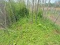Greenery at Kambalakonda Eco Park.JPG