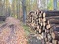 Grunewald - Baumstammen beim Waldweg (Log Piles by a Woodland Path) - geo.hlipp.de - 30305.jpg