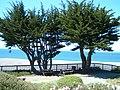 Gualala Cypress.jpg