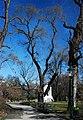 GuentherZ Naturdenkmal 276 2010-02-27 0138 Wien01 Stadtpark Japanischer Schnurbaum.jpg