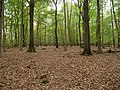 Hambach forest 15.jpg