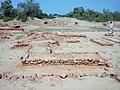 Harappa Archeology 4.jpg