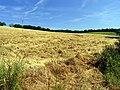 Harvested Field near Streatley - geograph.org.uk - 21197.jpg