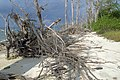 Havelock Island, Elephant Beach, Sand, Andaman Islands.jpg