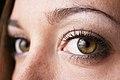 Hazel-green eye 2.jpg