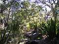 Heathcote National Park 11.jpg