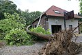 Heavy wind knocked down Catalpa in Begijnendijk Belgium 8 Aug 2018.jpg