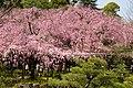 Heian Jingu Garden (3485228612).jpg