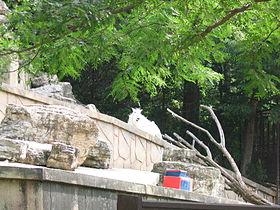 Henry Vilas Zoo IMG 2400.jpg