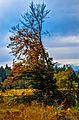 Herbstbeginn im Sauerland, Ebbegebirge (13777640194).jpg