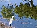 Heron on Humpbybong Creek-01+ (1035934605).jpg