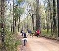 Hike fire trail.jpg