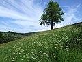 Hillside above Skyreholme, Yorks Dales - panoramio.jpg