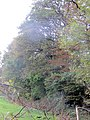 Hints of autumn - Berrydown Woods - October 2014 - panoramio.jpg