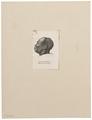 Homo sapiens - hoofd - Soedan - 1700-1880 - Print - Iconographia Zoologica - Special Collections University of Amsterdam - UBA01 IZ19400033.tif