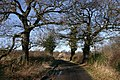 Hoober Hall Lane in Winter Sun - geograph.org.uk - 1124659.jpg