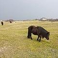 Horse JIHI 041.jpg
