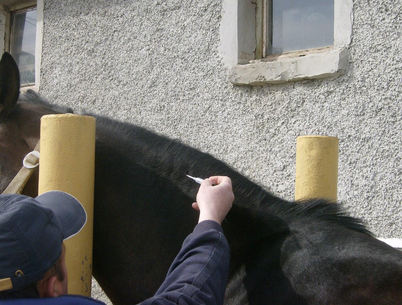 https://upload.wikimedia.org/wikipedia/commons/thumb/e/e5/Horse_microchiping_3.jpg/1280px-Horse_microchiping_3.jpg