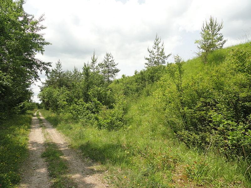 Un chemin à Huiron, compris dans la ZNIEFF Pelouses des talus de l'ancienne voie ferrée de Huiron à Sompuis.