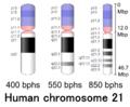 Human chromosome 21 - 400 550 850 bphs.png